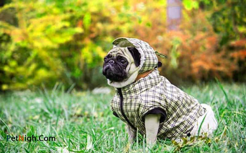 Why Do Dogs Need Jackets