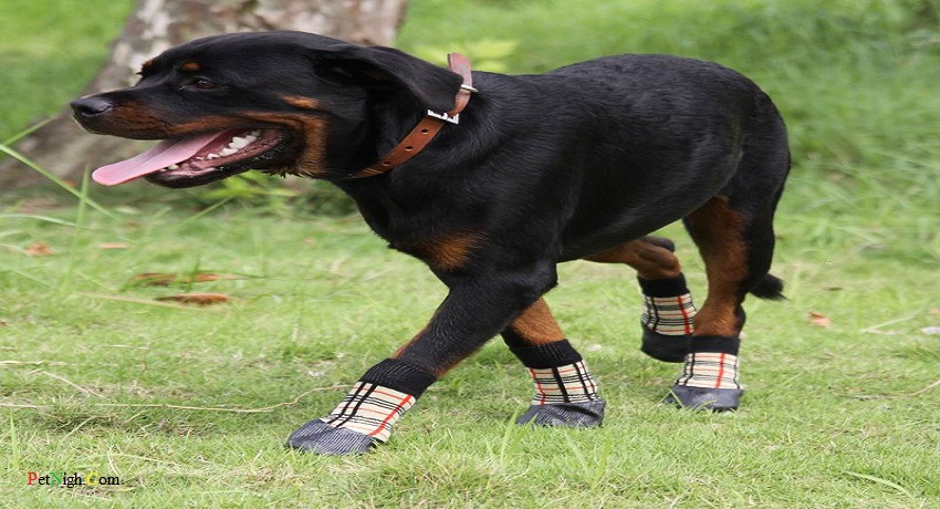 How to make dog shoes for summer