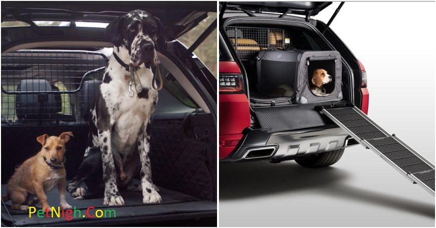 Best Car Seats for Small Dogs