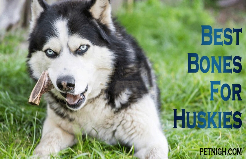 the healthy reward for your husky