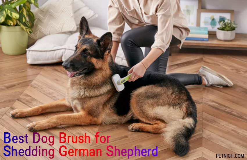 A Review on Best Dog Brush for Shedding German Shepherd