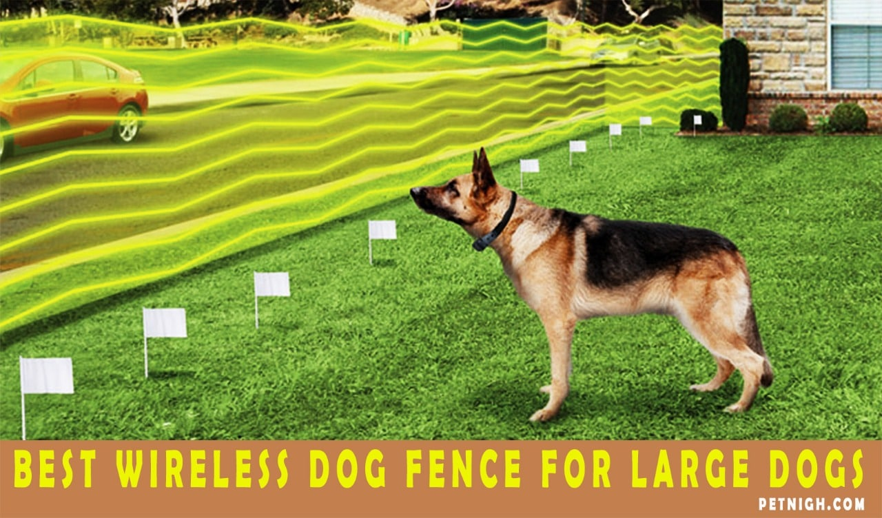 A Review on Best Wireless Dog Fence